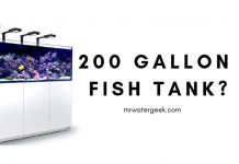 200 Gallon Fish Tank Review