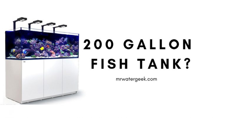 Do NOT Buy a 200 Gallon Fish Tank Until You Read This