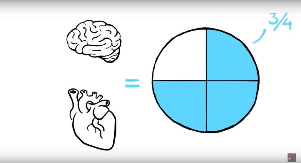 Brain-Heart-Three-Quatres-Water