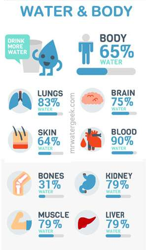 Why Drink More Water? Water Content of Your Organs and Body