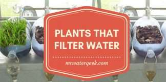 11 Plants That Filter Water In The Most INSANE Ways