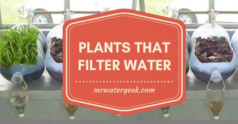 Why You Should *NOT* Use These 11 Plants That Filter Water