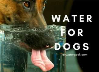 A-Z Water for Dogs: Dehydration, Drinking Too Much and DEATH